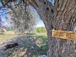 certificate olijfboom JannekeHoekzema2