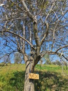 certificate olijfboom PatriciaHarryVdBoogaard-(3)
