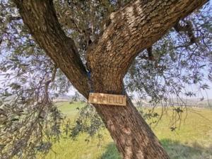 certificate olijfboom TeusRenes1