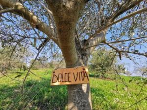 certificate olijfboom VeraDeJong-(2)