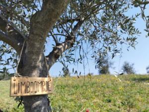 certificate olijfboom WilGerwine-(2)